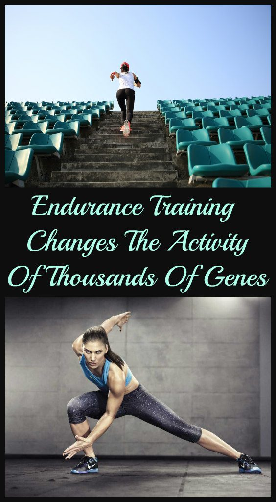 endurance-training-changes-the-activity-of-thousands-of-genes-1